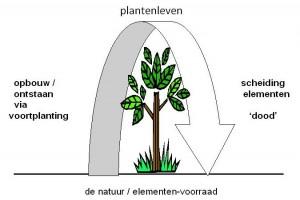 plantenleven paint crop